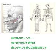 顎は体のバランサー - 自然歯科診療所