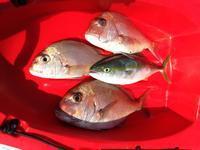 Enioy Kayak Fishing - 宮崎のそと遊び TRY KAYAK
