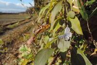 初冬の陽光 - 蝶の縁