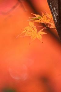 秋を惜しむ - cache-cache