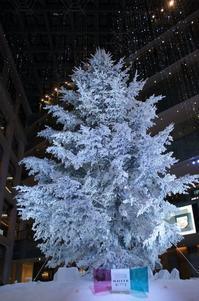 大きなモミの木のクリスマスツリー☆WHITE KITTE - さんじゃらっと☆blog2