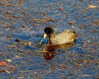 大塩湖で水辺の鳥さん - 星の小父さまフォトつづり