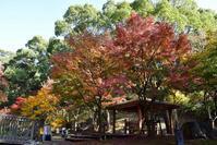 大濠公園の紅葉 - 美由紀の六角オセロ ラブ