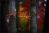 平林寺 -5 - Camellia-shige Gallery 2