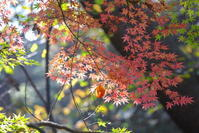 紅葉東漸寺 - tokoのblog