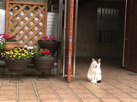 スキンシップ - いぬ猫フェレット&人間