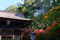 光と影法多山尊永寺 - 長い木の橋