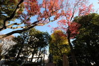 髙橋是清公園 - 錦眼鏡