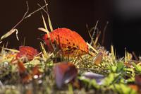 落ち葉の詩 - 風の彩り-2