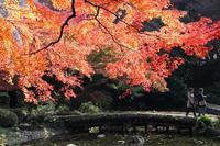 小石川後楽園の紅葉と、カワセミ - 子猫の迷い道Ⅱ