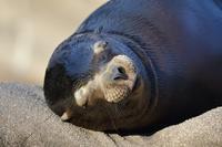 寝顔選手権~カリフォルニアアシカ~ - miyabine's フォト日記2~身の周りのきれい・可愛い・面白い~