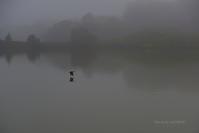 靜@ 霧の水上池界隈 - 東大寺が大好き