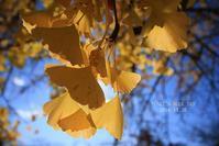 晩秋の街散歩♪ - FUNKY'S BLUE SKY