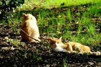 のんびり猫、山茶花と紅葉と - ぶらり散歩 ~四季折々フォト日記~