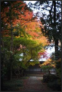 平林寺 -6 - Camellia-shige Gallery 2