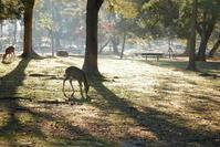 朝の奈良公園 - ぶらり休暇