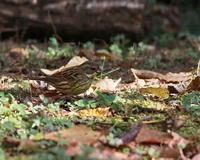 山のあいきょうもの・3 - 季節の鳥達