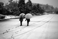 初雪 - Yoshi-A の写真の楽しみ