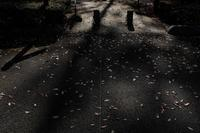 秋の終わり - 空を見上げて 〜Copy of memory〜
