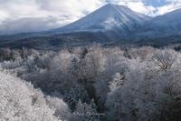 冬の到来 - Photo 森の声