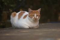 茶ちゃん - ネコと裏山日記