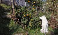 柑橘系 - 小太郎の白っぽい世界