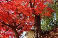 奈良公園の紅葉(1)@2018-12-02 - (新)トラちゃん&ちー・明日葉 観察日記