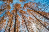 神戸市立森林植物園 - シセンのカナタ