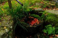 京の紅葉2018三千院・秋景色 - 花景色-K.W.C. PhotoBlog