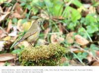 秋ヶ瀬公園・野鳥園 2018.12.8 - 鳥撮り遊び