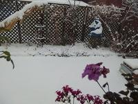 根雪になりそうなので - 北緯44度の雑記帳