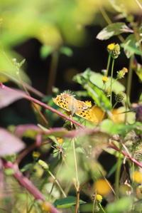 蝶です - 平凡な日々の中で