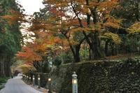 法多山の紅葉・4♪~ライトアップ~ - happy-cafe*vol.2
