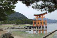 厳島神社 - i feel fine
