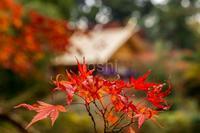 少し前の高鴨神社 - toshi の ならはまほろば