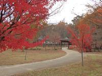 『各務野自然遺産の森を歩いて・・・・・』 - 自然風の自然風だより
