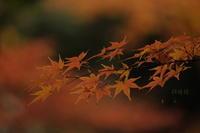 根津美術館庭園 - 錦眼鏡