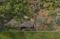 京の秋~落柿舎~ - 雲母(KIRA)の舟に乗って