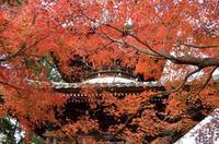 京の秋 ~清凉寺~ - 雲母(KIRA)の舟に乗って