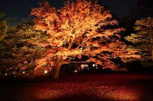東京で一番ロマンチックな紅葉(六義園) - 旅プラスの日記
