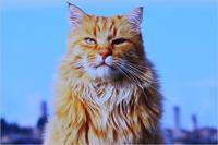 世界ネコ歩きイタリアトスカーナ - ときどき☆タス