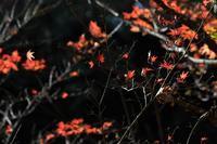 落ち葉舞い散る風景・・・ - 鳥と共に日々是好日