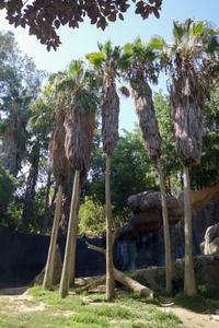 September 2018 Los Angeles Zoo 9 - 墨色の鳥籠