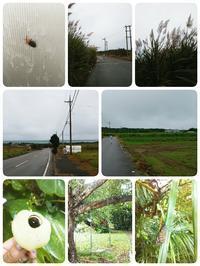 島あっちぃ。「小浜島の旅」完結編 - なんくるないさ~、ワンッ!!