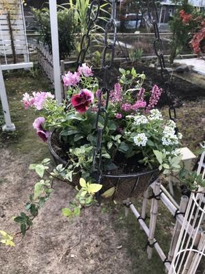 3つの「寄せ植え」とソーラーガーデンライト - 小さな棲家