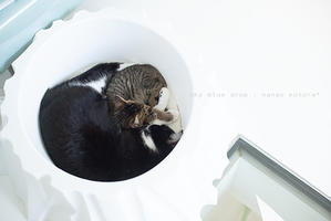 感謝の冬 - sky blue drop~14ニャンズトネコハウス//