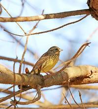 接近に期待 - ゆるゆる野鳥観察日記