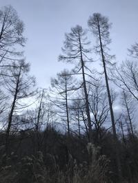 静かな師走の森 - 木洩れ日の森から