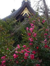 虚空蔵尊から愛宕神社へ - blueletter