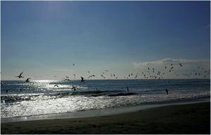カモメが飛んだ日 - 湘南の光に